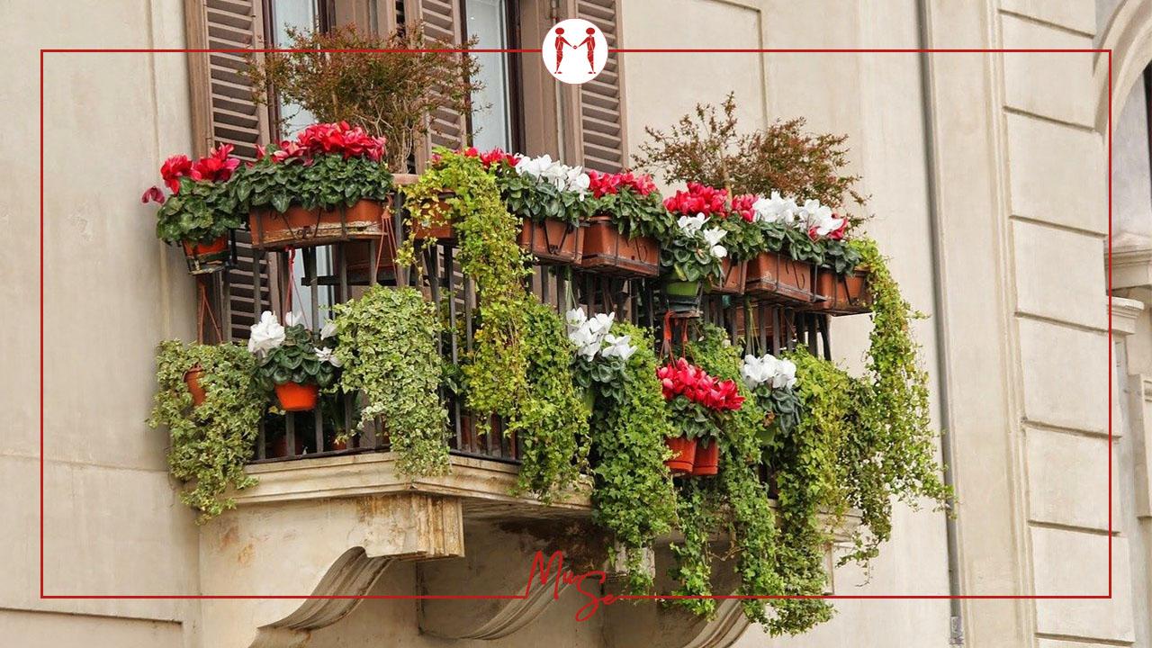 Ci sono dei limiti per il posizionamento delle piante da balcone?